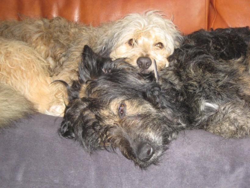 Gezocht: Gastgezinnen voor onze honden, wonend tussen Alkmaar – Amsterdam – Leiden