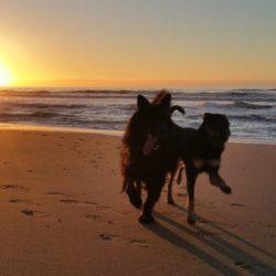 Richtlijnen ontwikkeling bewegingsapparaat jonge honden